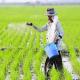 jenis usaha pertanian